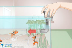 6 سیانو باکتری آب آکواریوم