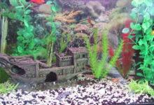 Photo of چگونه سیانوباکتری یا جلبک سبز آبی را در آکواریوم از بین ببریم؟
