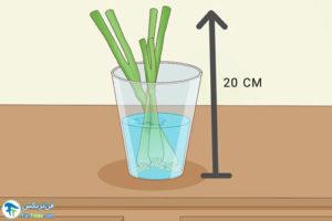 8 رشد پیازدر آب