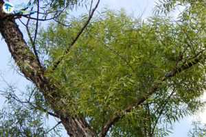 1 معرفی درختان مورد علاقه پروانه ها