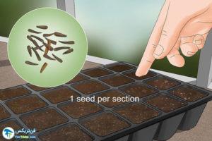 1 طرز کاشت گل لیاتریس