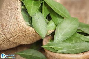 1 مزایا و نحوه استفاده روغن حنا هندی