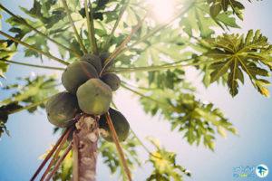 10 گیاهان مقاوم به نور کم