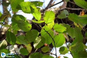 10 معرفی درختان مورد علاقه پروانهها
