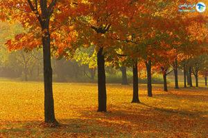 11 درختان مقاوم به نور کم