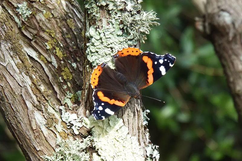 12 معرفی درختان مورد علاقه پروانه ها