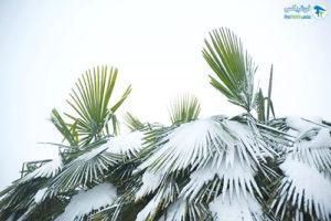12 درختان مقاوم به نور کم