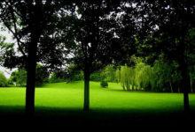 Photo of معرفی درختانی که در سایه دائمی و نور کم رشد می کنند