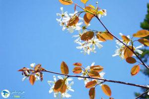 2 معرفی درختان مورد علاقه پروانه ها