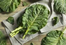 Photo of نحوه صحیح و اصولی کاشت، پرورش و استفاده از کولارد سبز