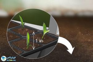 2 طرز کاشت گل لیاتریس