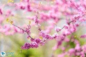 3 معرفی درختان مورد علاقه پروانه ها