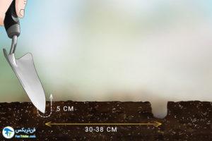3 طرز کاشت گل لیاتریس