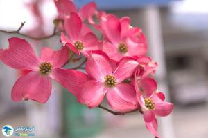 4 معرفی درختان مورد علاقه پروانه ها