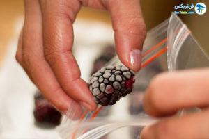 4 نگهداری طولانی میوهتمشک