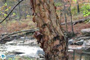 5 معرفی درختان مورد علاقه پروانه ها