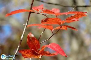 7 معرفی درختان مورد علاقه پروانه ها