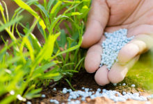 Photo of اصول صحیح استفاده از کود اوره و افزایش کیفیت خاک