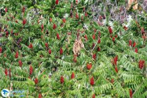 8 معرفی درختان مورد علاقه پروانه ها