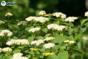 9 گیاهان مقاوم به نور کم