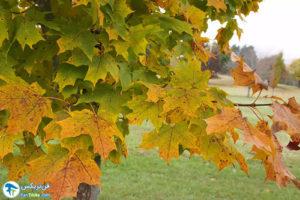 9 معرفی درختان مورد علاقه پروانهها