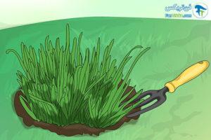 1 تکثیر گیاه گل برفی