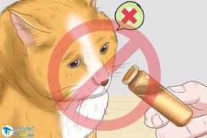 1 آرام کردن گربه با رایحه درمانی