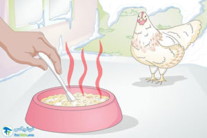 1 اصول غذا دادن به مرغ در زمستان
