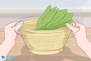 4 نحوه برداشت گیاه کاسنی