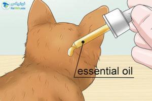 4 آرام کردن گربه با رایحه درمانی