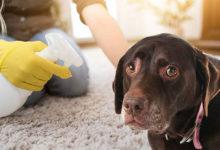 Photo of روش های از بین بردن لکه های بزاق سگ از روی لباس و وسایل