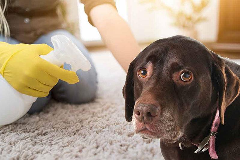 5 از بین بردن لکه بزاق سگ