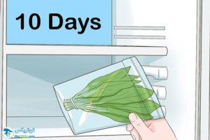 5 نحوه برداشت گیاه کاسنی