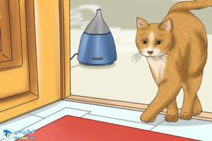 5 آرام کردن گربه با رایحه درمانی