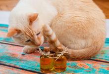 Photo of چگونه گربه خود را با رایحه درمانی آرام کنیم؟