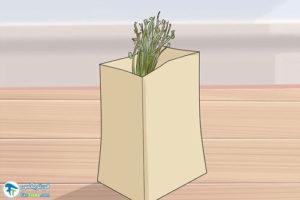 8 نحوه برداشت گیاه کاسنی