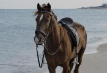 Photo of اصول تمیز کردن زین و افسار اسب
