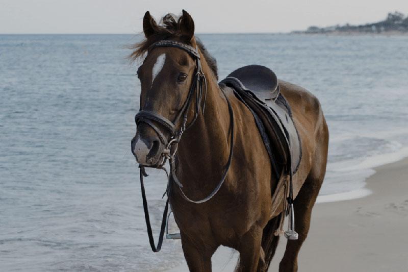 8 شستن و تمیز کردن افسار و زین اسب