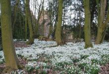 Photo of چگونه گل برفی را در باغ و باغچه تکثیر کنیم؟