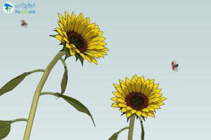 1 روش جذب کفشدوزک ها به باغ و باغچه