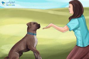 1 آماده کردن سگ برای رفتن به دامپزشکی