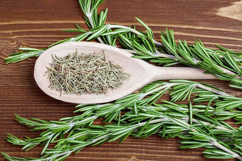 10 روش خشک کردن گیاه رزماری