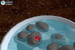 2 روش جذب کفشدوزک ها به باغ و باغچه