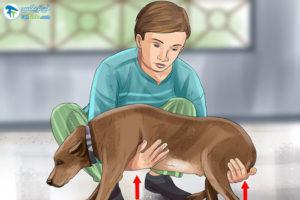 3 آماده کردن سگ برای رفتن به دامپزشکی