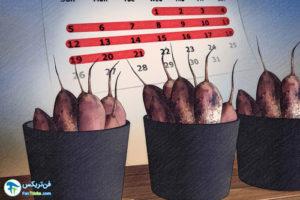 3 اصول نگهداری از پیاز گل کوکب