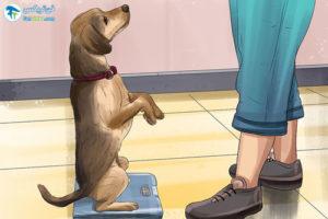 4 آماده کردن حیوانات خانگی برای رفتن به دامپزشکی