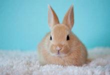 Photo of چگونه کک بدن خرگوش را از بین ببریم؟