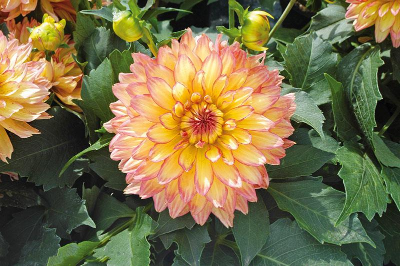 6 اصول نگهداری از پیاز گل کوکب