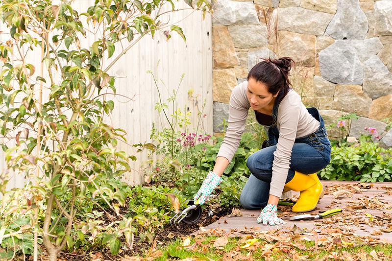 2 اصول انتقال گیاهان از باغچه به گلدان