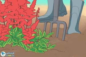 3 روش تکثیر گل آستیلب